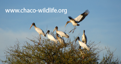 www.chaco-wildlife.org